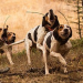 Features of Garmin Astro 430 Dog Tracking & GPS System/Handheld