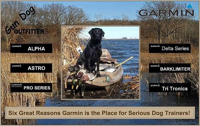 Build a Better Dog with Garmin