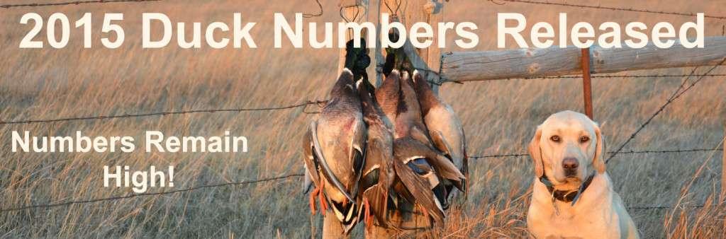 2015 Duck Numbers Released