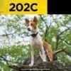 Dogtra 202C Training Collar | gun dog outfitter | gundogoutfitter.com