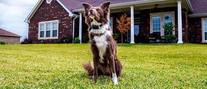 Garmin Delta Inbounds System | gun dog outfitter | gundogoutfitter.com