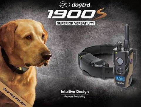 Train Your Gun Dog with DOGTRA 1900 Series