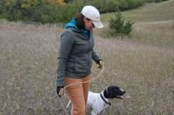 gundogoutfitter.com gun dog outfitter dog training dog lead