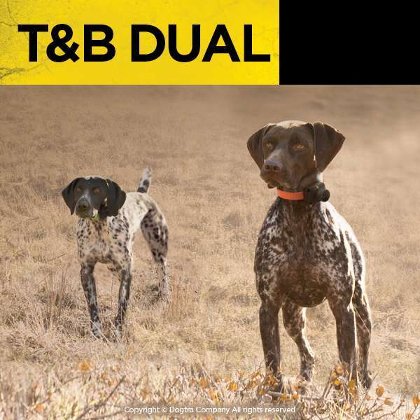 Dogtra Dual Train & Beep for Upland DOgs