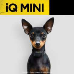 Dogtra IQ Mini