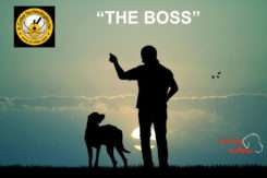 """Little else that compares to the effectiveness of E-Collar Technologies Boss e-Collar, """"the Boss""""."""